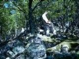 Fucking my wife in the forest