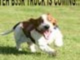 B33r Doggie