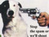 Stop ShootDog