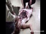 Fucking  Butchered Girl - Rape porn Videos